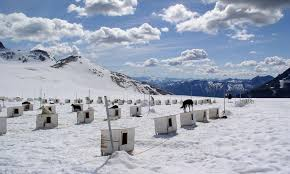 Price Of Rides At Winter Browse Skagway Tours Tour Types Husky Sled Rides