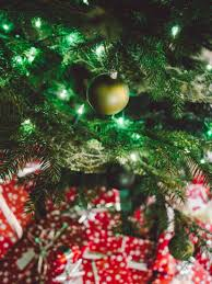free images branch winter white celebration green red