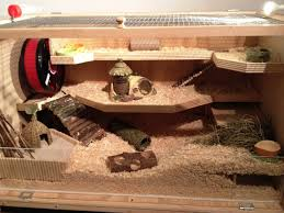 build your own hamster house design home thoughts on cage photo