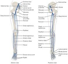 Foot Vascular Anatomy Blood Supply To Leg And Foot Foot Vascular Anatomy Human Anatomy