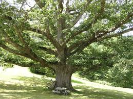 tree pruning services big o tree and lawn service