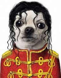 Halloween Costumes Michael Jackson Halloween Costume Dogs