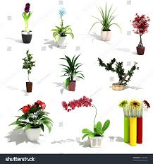 3d pack beautiful home plants stock illustration 74123986