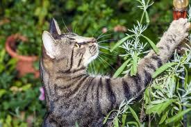 Keep Cats In Backyard Cat Proof Garden Ideas U2013 Keep Your Pets Inside Your Backyard