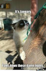 Grumpy Cat New Years Meme - 2183 best grumpy cat images on pinterest grumpy cat baby kittens