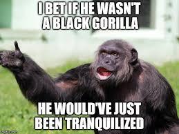 Gorilla Memes - gorilla memes 28 images 17 best ideas about harambe meme on