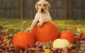 Cute Fall Wallpaper by Cute Puppy With Halloween Pumpkin Autumn Wallp 4895 Wallpaper