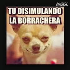 Memes De Chihuahua - tu disimulando la borrachera meme memes pinterest memes and