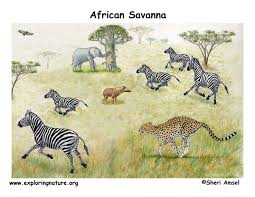 african veldt and savannah