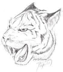 tiger face by firedolphin on deviantart