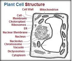cell structure and function animal cell structure and function