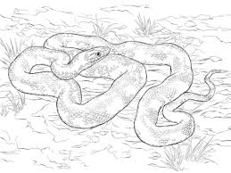 black rat snake coloring free printable coloring pages