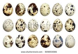 quail stock images royalty free images u0026 vectors shutterstock