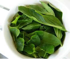 daun daun ajaib toko obat herbal online