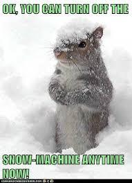 Funny Snow Meme - animal meme sick snow meme best of the funny meme