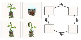 plant life cycle for kids worksheet phoenixpayday com