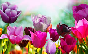 spring screensavers hd 21552 1920x1200 px hdwallsource com