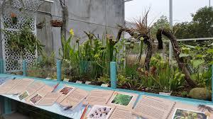carnivorous plants mosi outside