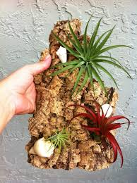 garden display ideas extraordinary air plant wall display ideas best idea home design