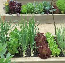 vegetable garden design how to layout a fall garden