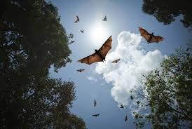 mammiferi volanti animali orientamento dei pipistrelli su circuiti cerebrali