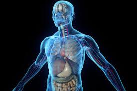 Human Anatomy Careers Free Online Human Anatomy U0026 Psychology Diploma Alison