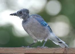 birding in northern va molting