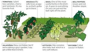 Garden Layouts The Vegetable Garden Layout A Well Planned Vegetable