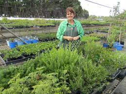 native plant list perth garden festival 2016 australian native nursery