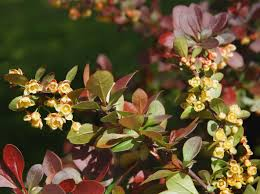 choosing zone 5 bushes for shade growing bushes in zone 5 shade