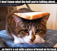 Cat In Bread Meme - i don t know what cat meme cat planet cat planet