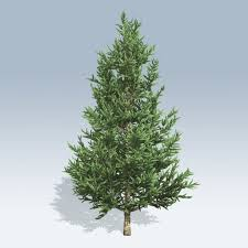 fraser fir tree fraser fir v6 speedtree