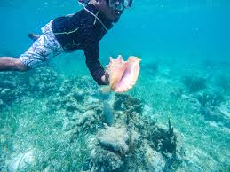 Where to go snorkeling in belize hol chan shark ray alley and