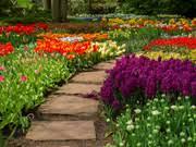 flower garden 2 play the free game online