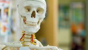 Which Cell Helps In Movement Of Bones Why Is Chemistry Important To The Study Of Anatomy U0026 Physiology