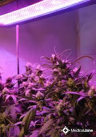 Led Grow Lights Cannabis 40 Best Led Grow Lights Images On Pinterest Led Grow Lights