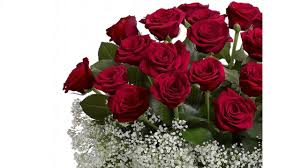 valentine roses and flowers to help you express your love this