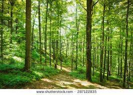 forest trees nature green wood sunlight stock photo 287122835