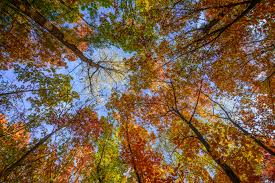fall trees background high quality free backgrounds