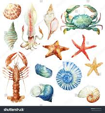 watercolor set isolated objects sea shells stock illustration