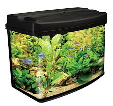Buy Ornamental Fish Outstanding Discus Fish Tags Buy Ornamental Fish Planting