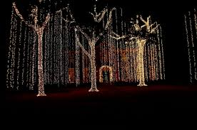 outdoor tree lights custom builders