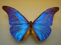 on butterflies bloomsbury bell