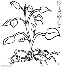 plants coloring pages funycoloring