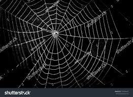 Halloween Cobweb Decorations Pretty Scary Frightening Spider Web Halloween Stock Photo