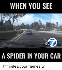 Spider Meme Misunderstood Spider Meme - when you see a spider in your car cars meme on sizzle