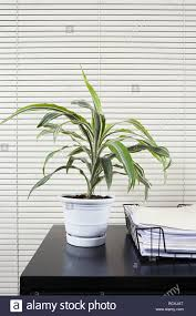 pot plant on an office desk stock photo royalty free image