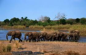 are elephants capable of empathy brain skewer