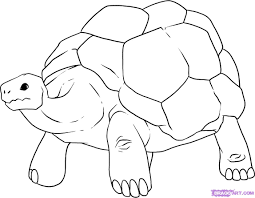 drawn turtle reptile pencil and in color drawn turtle reptile
