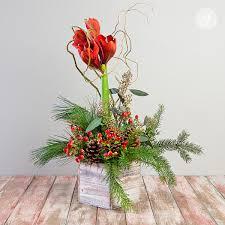 amaryllis in festive winter arrangement steve u0027s floral